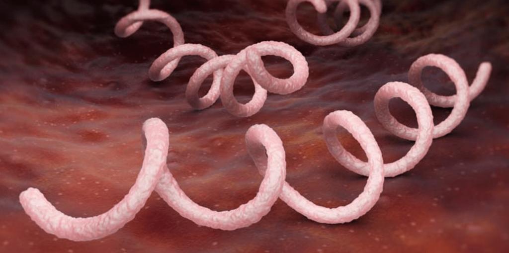 Бледная трипохема, вызывающая сифилис